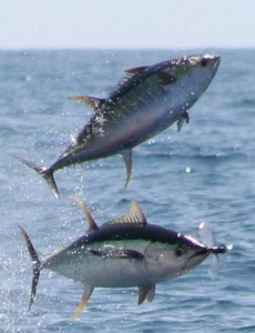 Hatteras North Carolina Fishing Spots - Oregon Inlet Fishing Spots